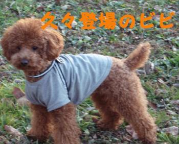 akigase (3)