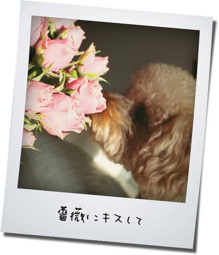 そら薔薇3