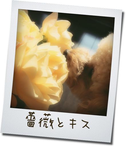 0217 11そら薔薇