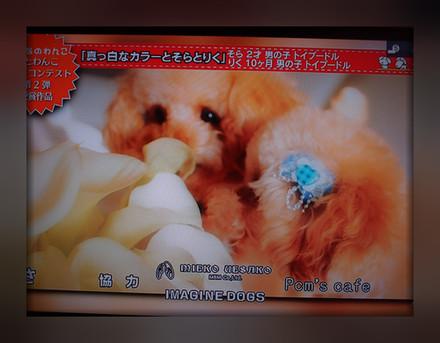 0411TV出演