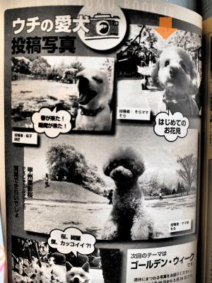 0512 2愛犬の友5月号