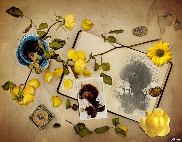 0831Rinちゃんと黄色い薔薇