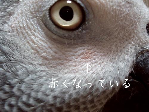 yomogi2009102701.jpg