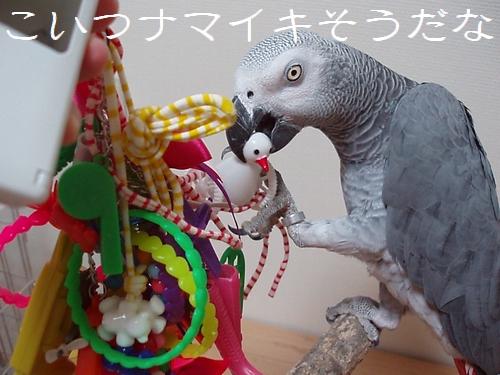 yomogi2009103104.jpg