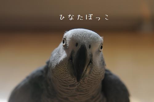 yomogi20091205.jpg