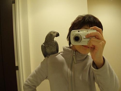 yomogi2009121001.jpg