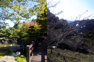 桜山公園 埼玉県 狭山市 行政書士 社会保険労務士 事務所