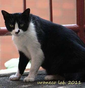 9月4日白黒猫