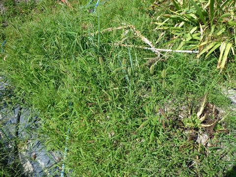 長ネギキャニオンは草原に