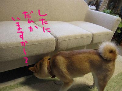002_20091226204120.jpg
