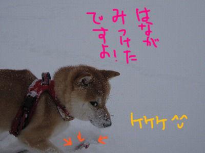 024_20091221140848.jpg