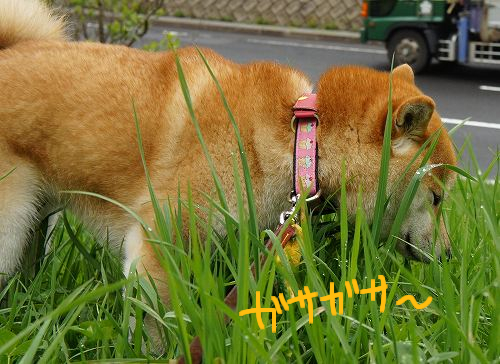 草にハマる華