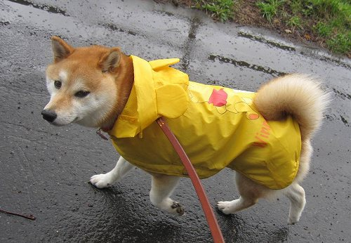 雨上がりました~