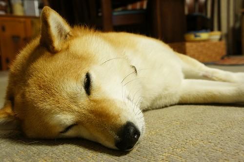 おやすみ・・・。