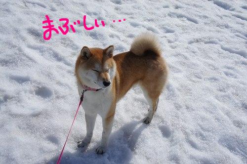 マブイゼ!!・・・死語かなぁ~^^;