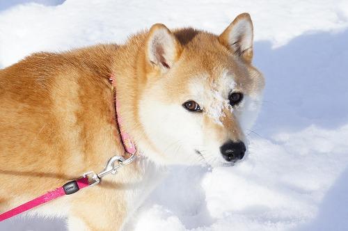 雪は楽しいよ♪