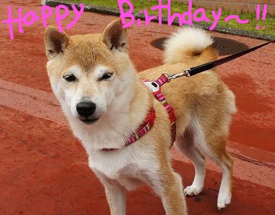 つららちゃん、お誕生日おめでとう!!