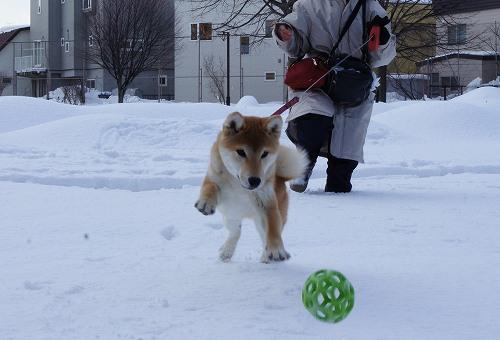 賢ちゃんボールで遊んだよ!