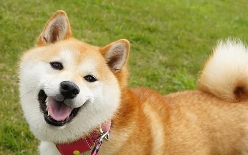 納得の笑顔!