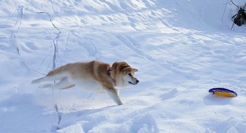 ねじれ?飛行犬。