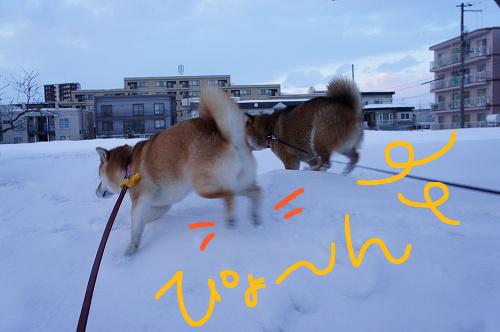 雪の壁も飛び乗ります