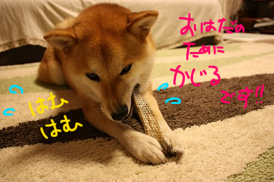 cはな (56)