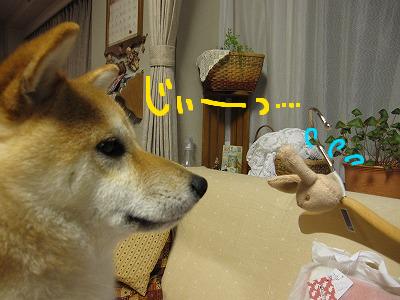 cはな (14)