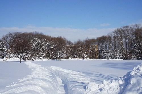 丸太渡りの公園