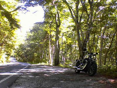 s-13:08大山ぶな林