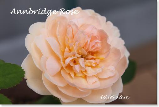 annbridge11-01