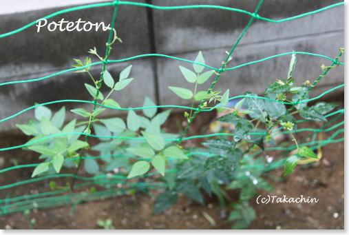 poteton02