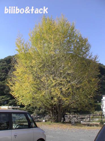 20091101_23.jpg