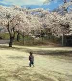 桜とシーちゃん