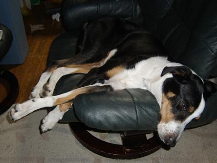 椅子の上のイヌ