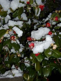 2010年の初積雪1