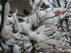 2010年の初積雪2