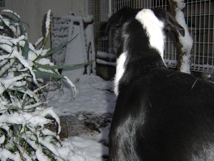 2010年の初積雪(キラ)