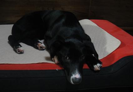 ベッド占有 カガリ1
