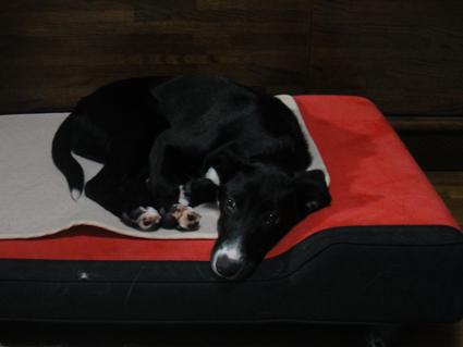 ベッド占有 カガリ2