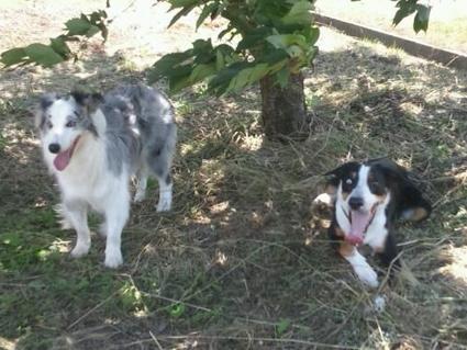 木陰でキラ&ラクス