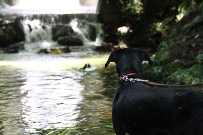 カガリ初川遊び(まずキラの泳ぎをガン見)