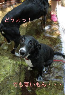 カガリ初川遊び(遊びたいけど寒いかも)