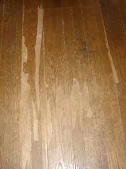 カガリが剥いだ床