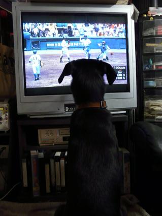 カガリの高校野球観戦1