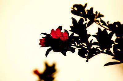 20110609-DSC_0001.jpg