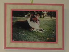 dog  family 003 (3)