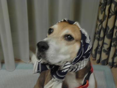dog++family+014_convert_20110528150456.jpg