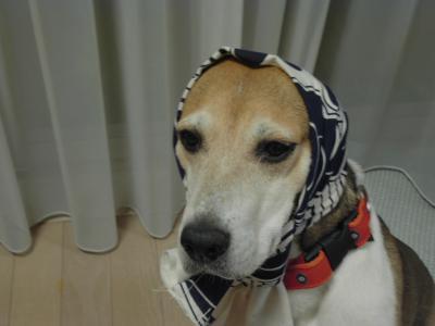 dog++family+015_convert_20110528150531.jpg