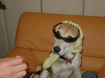 dog++family+019_convert_20110528154240.jpg