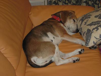dog++family+030_convert_20110528150608.jpg
